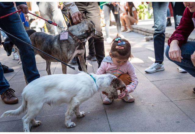 """""""Гурме с куче и за куче"""" е поредното събитие от кампанията """"Капана дог"""""""