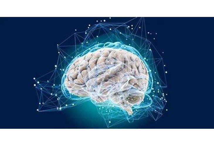 Изследването на триизмерната карта ще позволи да се разбере как се променят отделни части на мозъка при различни заболявания